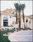 Stucco Home with Palm Trees